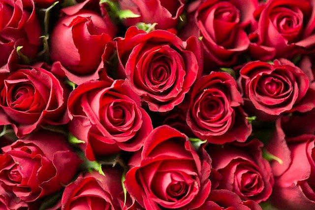 obrovská kytice rudých růží